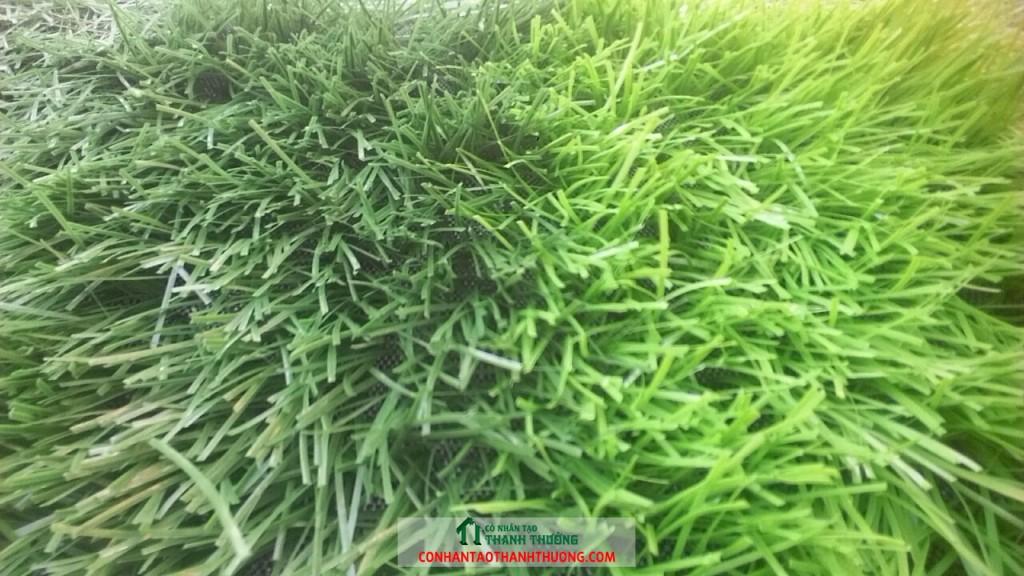 cỏ nhân tạo sân bóng đá hà nội